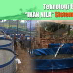 Teknik Budidaya Ikan Nila Sistem Bioflok
