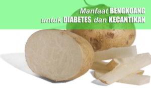 Kandungan dan Manfaat BENGKOANG untuk Penderita DIABETES, Kecantikan, DIET dan Kesehatan