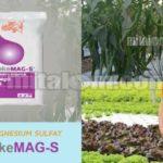 Kandungan dan Manfaat Pupuk Magnesium Sulfat MerokeMAG-S