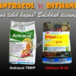 ANTRACOL vs DITHANE M-45 : Bolehkah Dicampur, Mana Lebih Bagus?