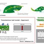 Merk Dagang INSEKTISIDA TRANSLAMINAR Bahan Aktif Metomil, Abamectin, Imidakloprid dan Profenofos