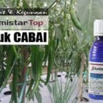 AMISTARTOP untuk CABAI : Dosis, Manfaat dan Cara Aplikasi Fungisida AmistarTop 325 SC untuk Tanaman Cabai