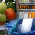 8+ Manfaat PUPUK KALSIUM untuk Tomat : Cegah Rontok, Layu, Buah Busuk Hingga Tingkatkan Bobot