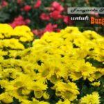 9+ Jenis Fungisida untuk Bunga KRISAN : Fungisida untuk Mengendalikan Penyakit Tanaman Bunga Krisan