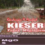 Pupuk KIESERITE : Kandungan, Manfaat dan Dosis Pupuk KIESERITE Magnesium per Hektar