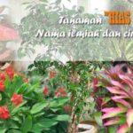 37 Jenis TANAMAN HIAS DAUN Indoor-Outdoor & Nama Latinnya !! Lengkap dengan Ciri-ciri dan Gambar