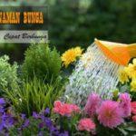 Pupuk Tanaman Hias Bunga, 7 Trik Sederhana agar Tanaman Bunga Cepat dan Rajin Berbunga