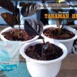 Cara Menggunakan Pupuk NPK MUTIARA pada Tanaman Hias dan Bunga