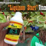 Begini Cara Menggunakan LIQUINOX START Vitamin B1 untuk Hindari Stres dan Perangsang Akar