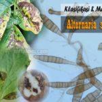 Klasifikasi dan Morfologi Alternaria solani, Patogen Penyebab Bercak Kering pada Tanaman
