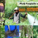 Fungisida untuk Jamur PHYTOPHTHORA : Inilah Daftar Merk Fungisida untuk Mengendalikan Phytophthora