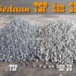 Serupa Tapi Tak Sama !! Ini 6 Perbedaan Pupuk TSP dan SP-36 yang Perlu Diketahui