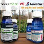 Fungisida SCORE vs AMISTARTOP !! Mana Yang Lebih Handal Kendalikan Jamur?