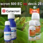 CURACRON vs DECIS : Bolehkah Dua Jenis Insektisida ini Dicampur?