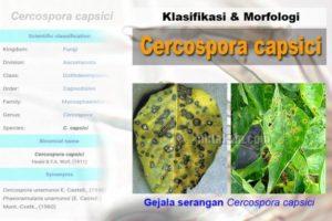 Klasifikasi Morfologi C. capsici