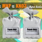 Inilah Perbedaan Pupuk MKP vs KNO3 : Apakah Kandungan dan Fungsinya Tidak Sama?