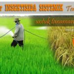 Insektisida Sistemik Terbaik untuk Padi : Merk Dagang, Bahan Aktif Lengkap dengan Dosis Aplikasi