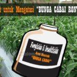 Obat (FUNGISIDA – INSEKTISIDA) untuk Mengatasi Bunga Cabai Rontok