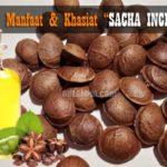 9+ Manfaat Kacang SACHA INCHI : Mengontrol Kolesterol Hingga Menyehatkan Kulit dan Mata
