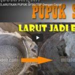 Video Cara Melarutkan Pupuk SP36/TSP Dengan Cepat Menjadi Bubur